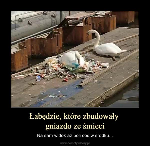 Łabędzie, które zbudowały gniazdo ze śmieci – Na sam widok aż boli coś w środku...