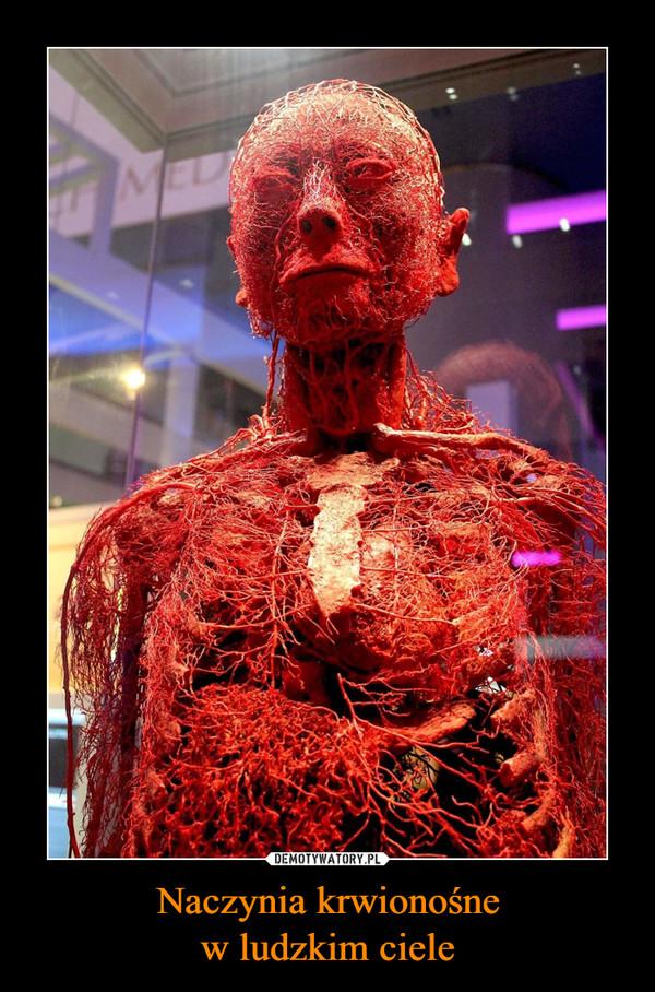 Naczynia krwionośnew ludzkim ciele –