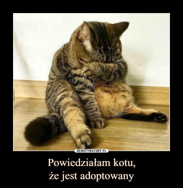 Powiedziałam kotu,że jest adoptowany –