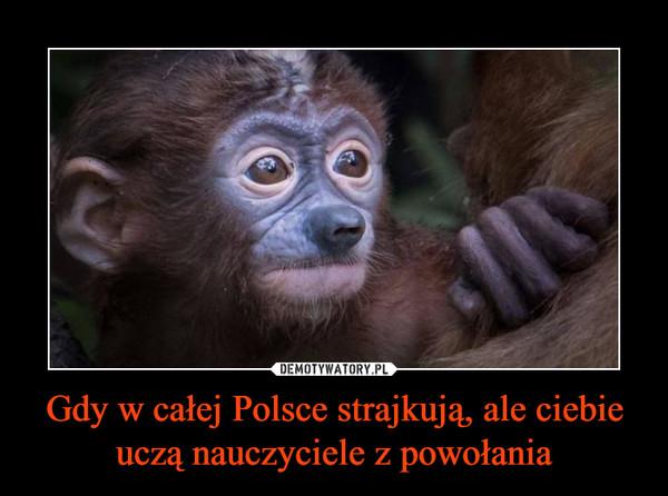 Gdy w całej Polsce strajkują, ale ciebie uczą nauczyciele z powołania –