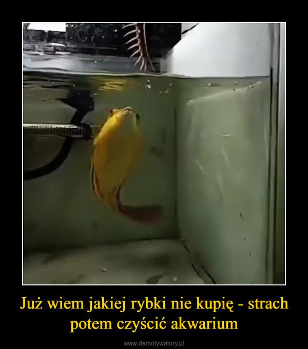 Już wiem jakiej rybki nie kupię - strach potem czyścić akwarium –