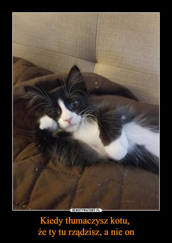 Kiedy tłumaczysz kotu, że ty tu rządzisz, a nie on –