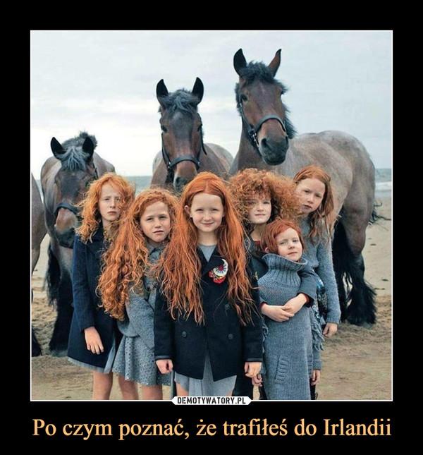 Po czym poznać, że trafiłeś do Irlandii –