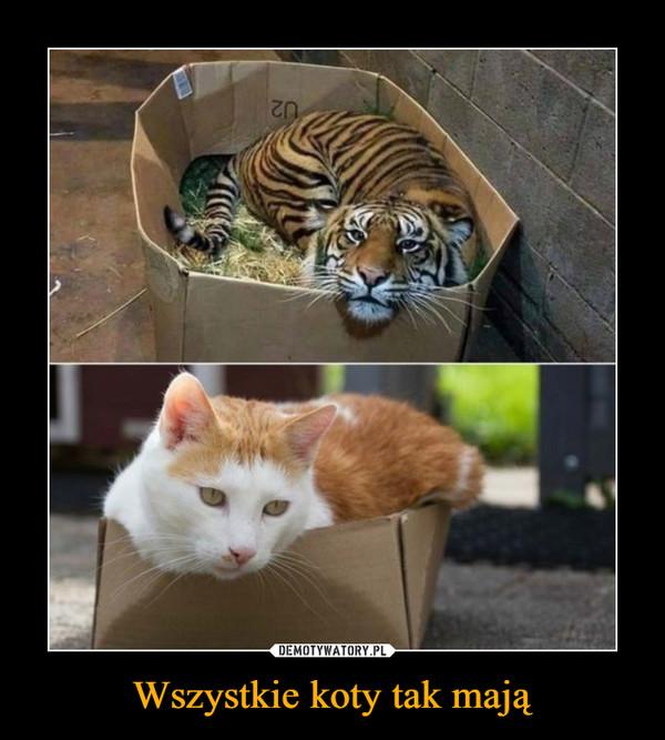 Wszystkie koty tak mają –