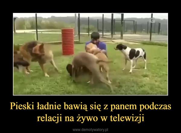Pieski ładnie bawią się z panem podczas relacji na żywo w telewizji –