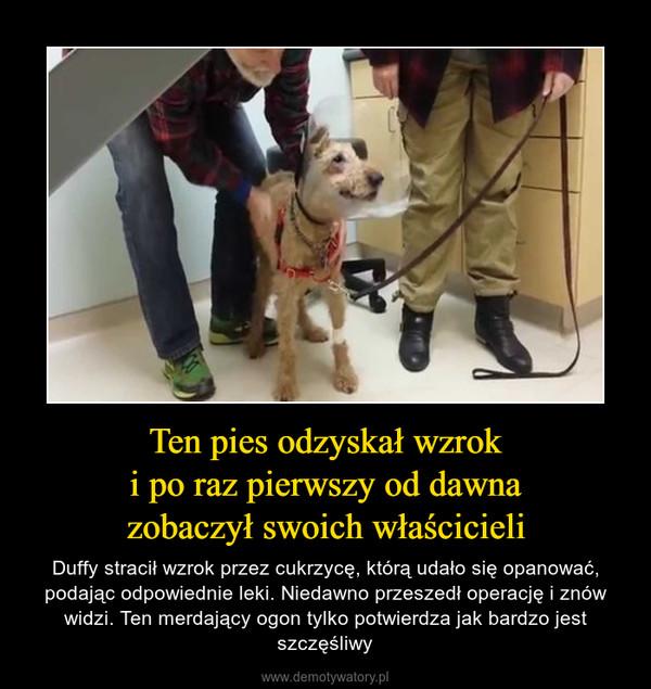 Ten pies odzyskał wzroki po raz pierwszy od dawnazobaczył swoich właścicieli – Duffy stracił wzrok przez cukrzycę, którą udało się opanować, podając odpowiednie leki. Niedawno przeszedł operację i znów widzi. Ten merdający ogon tylko potwierdza jak bardzo jest szczęśliwy