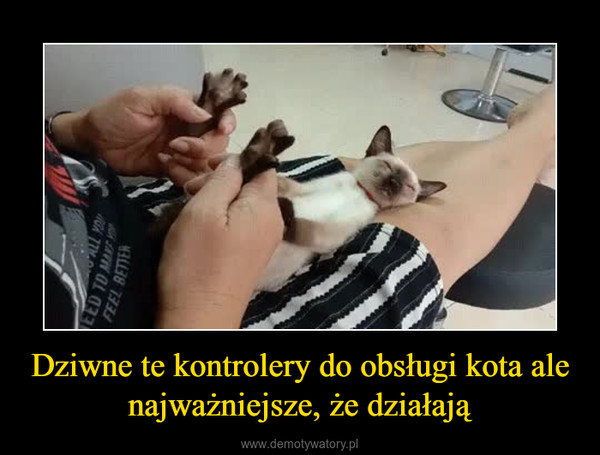 Dziwne te kontrolery do obsługi kota ale najważniejsze, że działają –