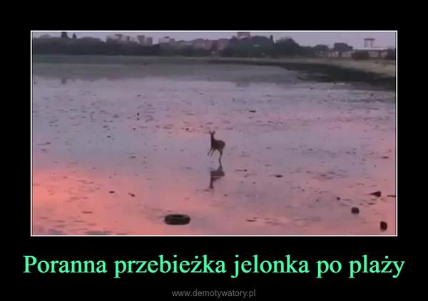 Poranna przebieżka jelonka po plaży –