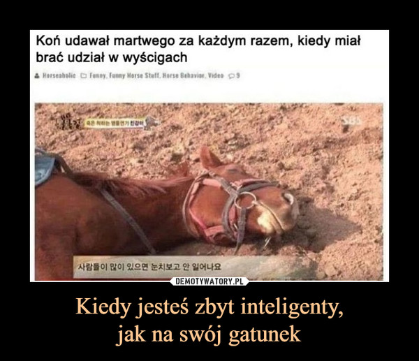 Kiedy jesteś zbyt inteligenty,jak na swój gatunek –  Koń udawał martwego za każdym razem, kiedy miał brać udział w wyścigach