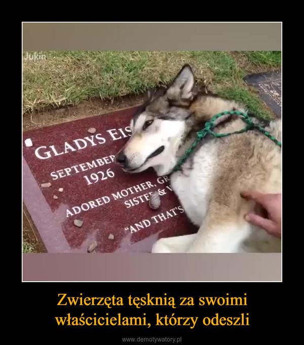 Zwierzęta tęsknią za swoimi właścicielami, którzy odeszli –