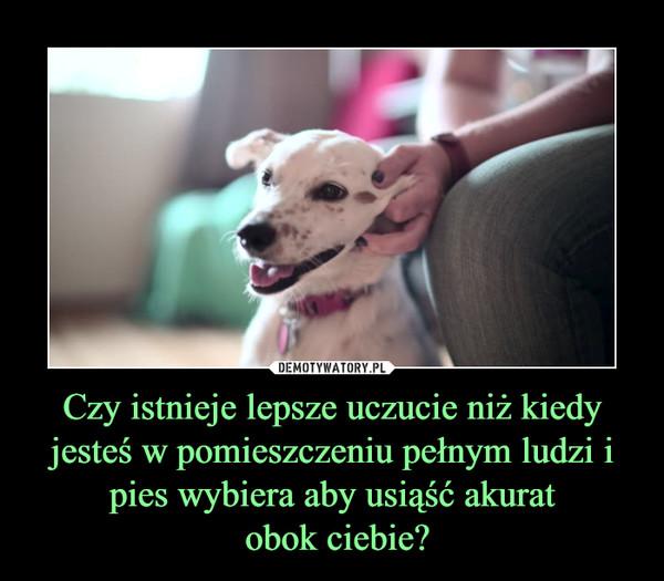 Czy istnieje lepsze uczucie niż kiedy jesteś w pomieszczeniu pełnym ludzi i pies wybiera aby usiąść akurat obok ciebie? –