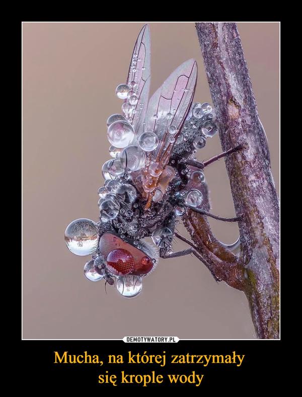 Mucha, na której zatrzymały się krople wody –