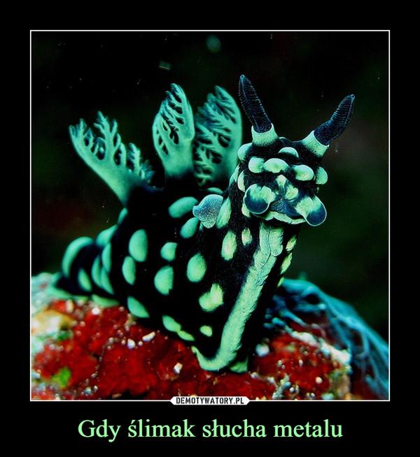 Gdy ślimak słucha metalu –