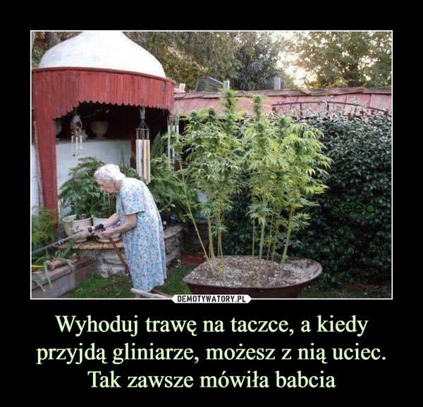 Wyhoduj trawę na taczce, a kiedy przyjdą gliniarze, możesz z nią uciec. Tak zawsze mówiła babcia –