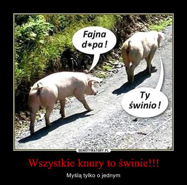 Wszystkie knury to świnie!!!