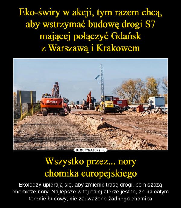Wszystko przez... norychomika europejskiego – Ekolodzy upierają się, aby zmienić trasę drogi, bo niszczą chomicze nory. Najlepsze w tej całej aferze jest to, że na całym terenie budowy, nie zauważono żadnego chomika