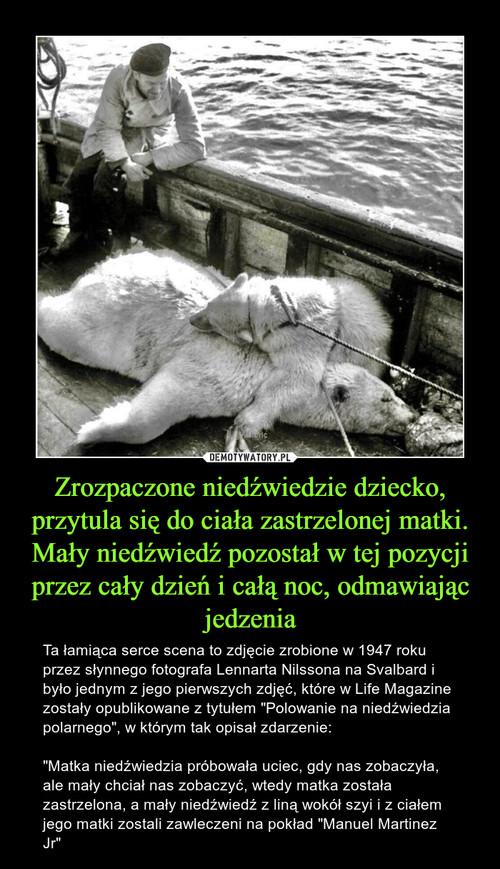 Zrozpaczone niedźwiedzie dziecko, przytula się do ciała zastrzelonej matki. Mały niedźwiedź pozostał w tej pozycji przez cały dzień i całą noc, odmawiając jedzenia
