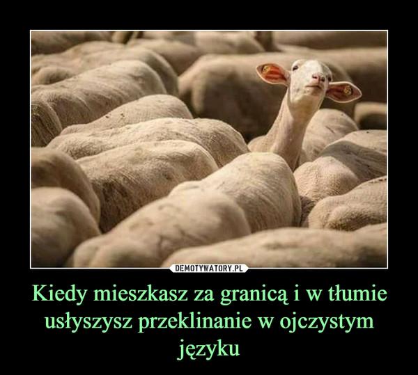 Kiedy mieszkasz za granicą i w tłumie usłyszysz przeklinanie w ojczystym języku –