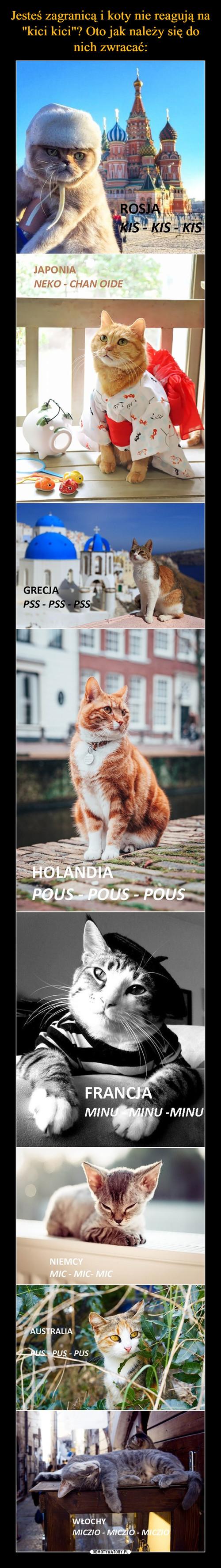 """Jesteś zagranicą i koty nie reagują na """"kici kici""""? Oto jak należy się do nich zwracać:"""