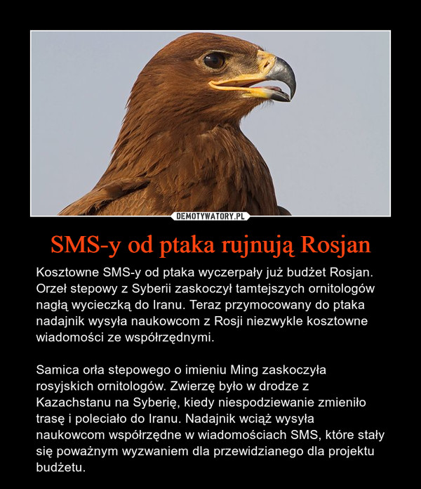 SMS-y od ptaka rujnują Rosjan – Kosztowne SMS-y od ptaka wyczerpały już budżet Rosjan. Orzeł stepowy z Syberii zaskoczył tamtejszych ornitologów nagłą wycieczką do Iranu. Teraz przymocowany do ptaka nadajnik wysyła naukowcom z Rosji niezwykle kosztowne wiadomości ze współrzędnymi.Samica orła stepowego o imieniu Ming zaskoczyła rosyjskich ornitologów. Zwierzę było w drodze z Kazachstanu na Syberię, kiedy niespodziewanie zmieniło trasę i poleciało do Iranu. Nadajnik wciąż wysyła naukowcom współrzędne w wiadomościach SMS, które stały się poważnym wyzwaniem dla przewidzianego dla projektu budżetu.