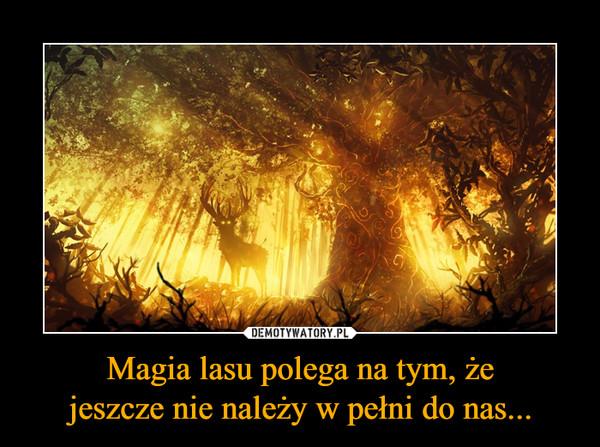 Magia lasu polega na tym, żejeszcze nie należy w pełni do nas... –