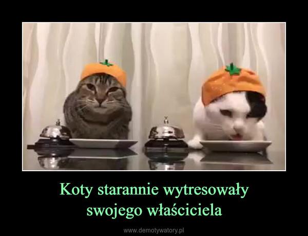 Koty starannie wytresowałyswojego właściciela –