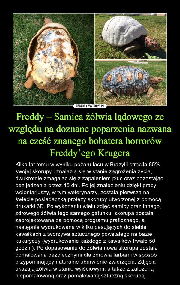 Freddy – Samica żółwia lądowego ze względu na doznane poparzenia nazwana na cześć znanego bohatera horrorów Freddy'ego Krugera – Kilka lat temu w wyniku pożaru lasu w Brazylii straciła 85% swojej skorupy i znalazła się w stanie zagrożenia życia, dwukrotnie zmagając się z zapaleniem płuc oraz pozostając bez jedzenia przez 45 dni. Po jej znalezieniu dzięki pracy wolontariuszy, w tym weterynarzy, została pierwszą na świecie posiadaczką protezy skorupy utworzonej z pomocą drukarki 3D. Po wykonaniu wielu zdjęć samicy oraz innego, zdrowego żółwia tego samego gatunku, skorupa została zaprojektowana za pomocą programu graficznego, a następnie wydrukowana w kilku pasujących do siebie kawałkach z tworzywa sztucznego powstałego na bazie kukurydzy (wydrukowanie każdego z kawałków trwało 50 godzin). Po dopasowaniu do żółwia nowa skorupa została pomalowana bezpiecznymi dla zdrowia farbami w sposób przypominający naturalne ubarwienie zwierzęcia. Zdjęcia ukazują żółwia w stanie wyjściowym, a także z założoną niepomalowaną oraz pomalowaną sztuczną skorupą.