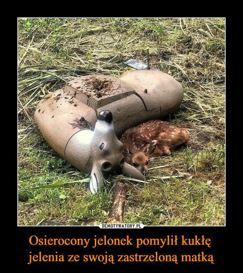 Osierocony jelonek pomylił kukłę  jelenia ze swoją zastrzeloną matką
