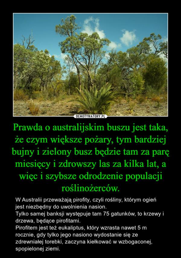 Prawda o australijskim buszu jest taka, że czym większe pożary, tym bardziej bujny i zielony busz będzie tam za parę miesięcy i zdrowszy las za kilka lat, a więc i szybsze odrodzenie populacji roślinożerców. – W Australii przeważają pirofity, czyli rośliny, którym ogień jest niezbędny do uwolnienia nasion.Tylko samej banksji występuje tam 75 gatunków, to krzewy i drzewa, będące pirofitami.Pirofitem jest też eukaliptus, który wzrasta nawet 5 m rocznie, gdy tylko jego nasiono wydostanie się ze zdrewniałej torebki, zaczyna kiełkować w wzbogaconej, spopielonej ziemi.