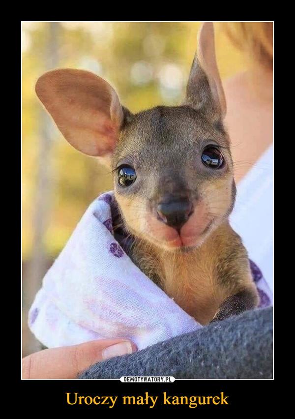 Uroczy mały kangurek –