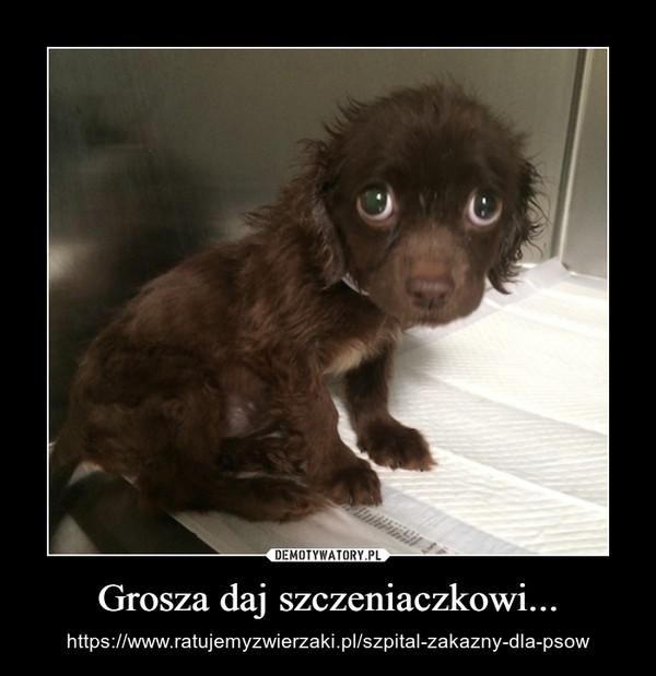 Grosza daj szczeniaczkowi... – https://www.ratujemyzwierzaki.pl/szpital-zakazny-dla-psow