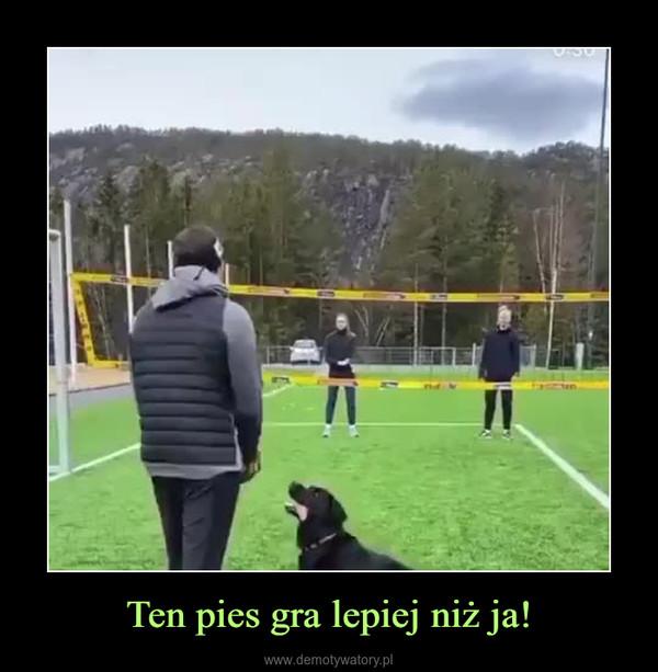 Ten pies gra lepiej niż ja! –