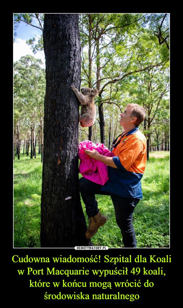 Cudowna wiadomość! Szpital dla Koali w Port Macquarie wypuścił 49 koali, które w końcu mogą wrócić do środowiska naturalnego –