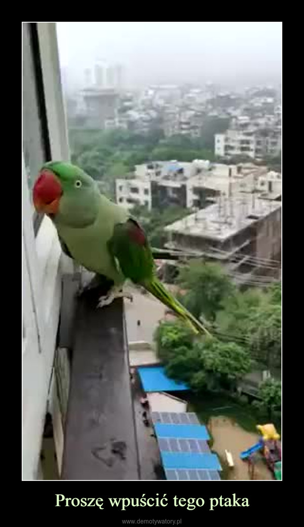Proszę wpuścić tego ptaka –