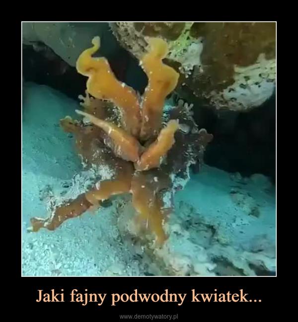 Jaki fajny podwodny kwiatek... –