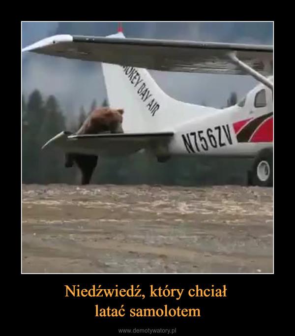 Niedźwiedź, który chciał latać samolotem –