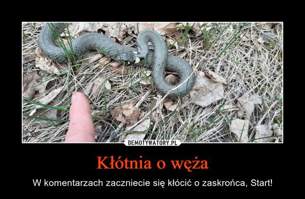Kłótnia o węża – W komentarzach zaczniecie się kłócić o zaskrońca, Start!