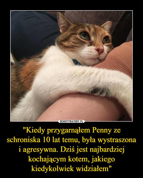 """""""Kiedy przygarnąłem Penny ze schroniska 10 lat temu, była wystraszona i agresywna. Dziś jest najbardziej kochającym kotem, jakiego kiedykolwiek widziałem"""" –"""