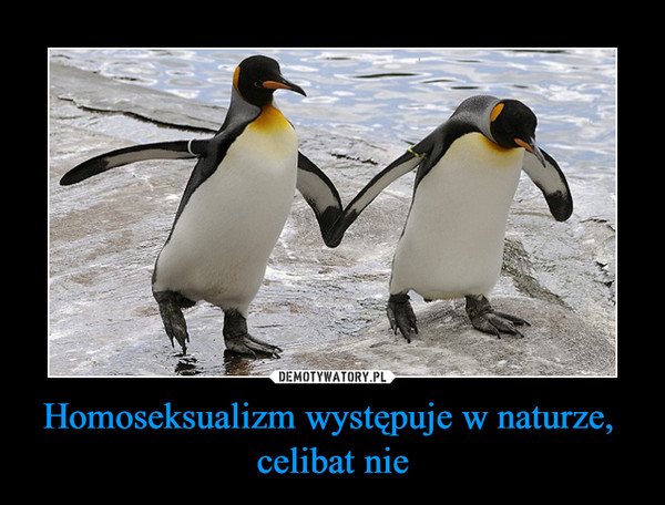 Homoseksualizm występuje w naturze, celibat nie –
