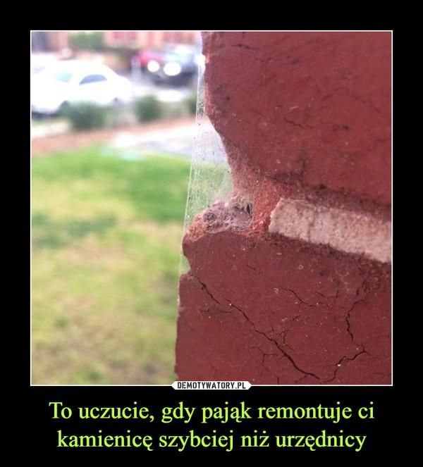 To uczucie, gdy pająk remontuje ci kamienicę szybciej niż urzędnicy
