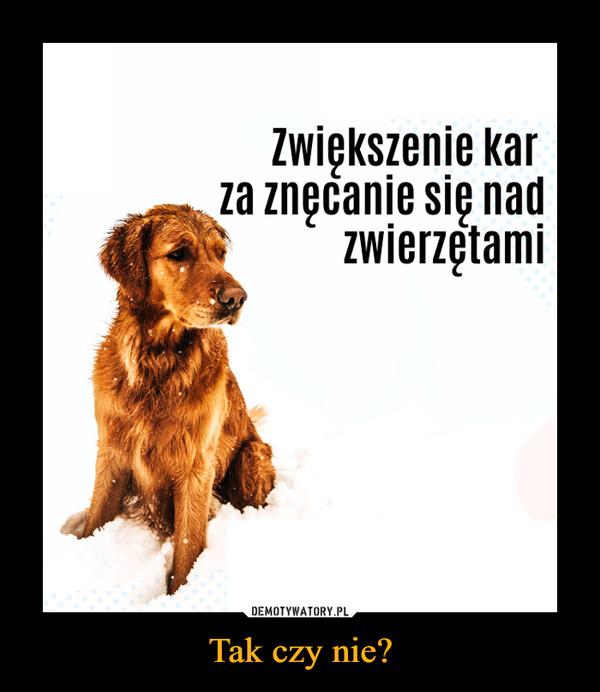Tak czy nie? –  Zwiększenie kar za znęcanie się nad zwierzętami