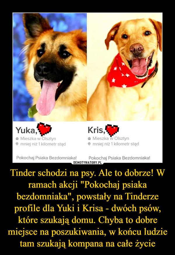 """Tinder schodzi na psy. Ale to dobrze! W ramach akcji """"Pokochaj psiaka bezdomniaka"""", powstały na Tinderze profile dla Yuki i Krisa - dwóch psów, które szukają domu. Chyba to dobre miejsce na poszukiwania, w końcu ludzie tam szukają kompana na całe życie –"""