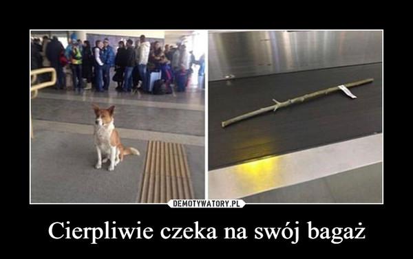 Cierpliwie czeka na swój bagaż –
