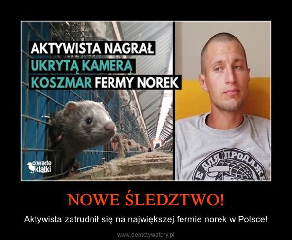 NOWE ŚLEDZTWO! – Aktywista zatrudnił się na największej fermie norek w Polsce!