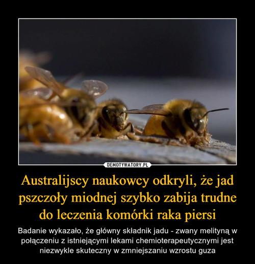 Australijscy naukowcy odkryli, że jad pszczoły miodnej szybko zabija trudne do leczenia komórki raka piersi
