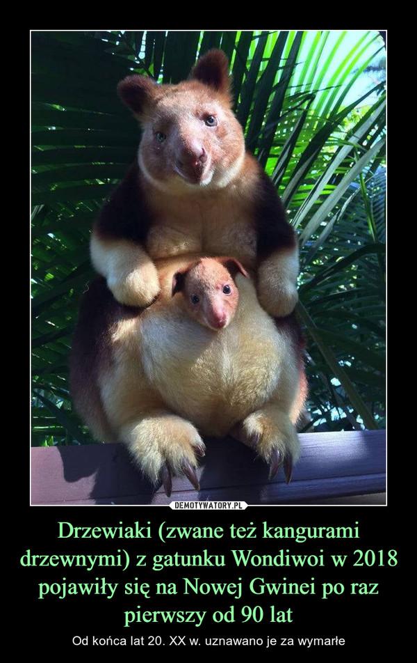Drzewiaki (zwane też kangurami drzewnymi) z gatunku Wondiwoi w 2018 pojawiły się na Nowej Gwinei po raz pierwszy od 90 lat – Od końca lat 20. XX w. uznawano je za wymarłe