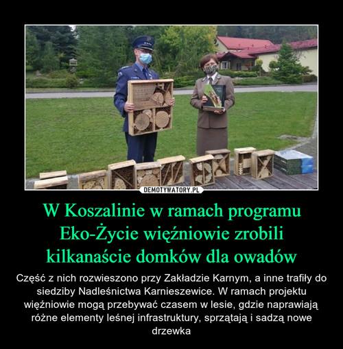 W Koszalinie w ramach programu Eko-Życie więźniowie zrobili kilkanaście domków dla owadów