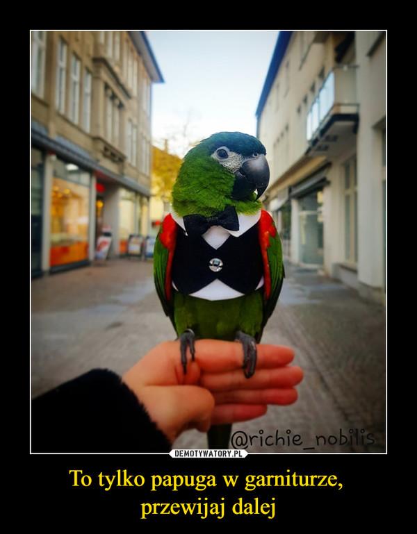 To tylko papuga w garniturze, przewijaj dalej –