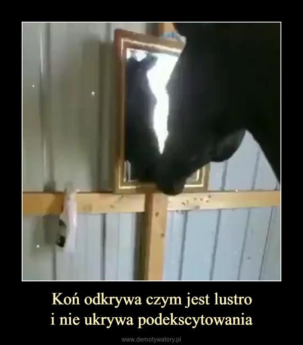 Koń odkrywa czym jest lustroi nie ukrywa podekscytowania –