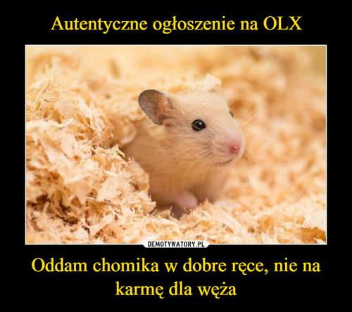 Autentyczne ogłoszenie na OLX Oddam chomika w dobre ręce, nie na karmę dla węża